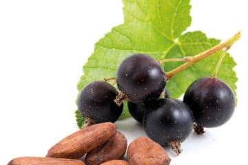 Пряные фрукты Чёрная Смородина-Какао
